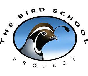 The Bird School Project